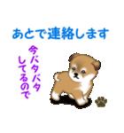 よちよち秋田犬 毎日優しいスタンプ(個別スタンプ:32)