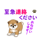 よちよち秋田犬 毎日優しいスタンプ(個別スタンプ:33)
