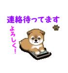 よちよち秋田犬 毎日優しいスタンプ(個別スタンプ:34)