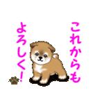 よちよち秋田犬 毎日優しいスタンプ(個別スタンプ:40)