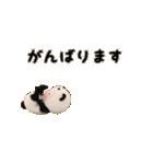 【動く】パンダタオル【日常】(個別スタンプ:06)