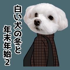 白い犬の冬と年末年始2
