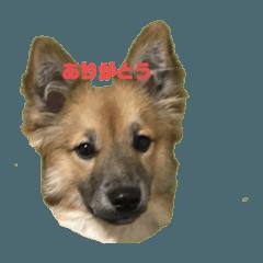 ビビリ犬ペコちゃん