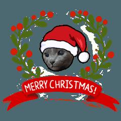 猫ルキーの家族 のクリスマス(冬)