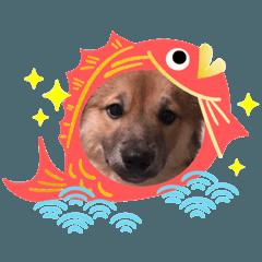 ビビリ犬ペコちゃん2