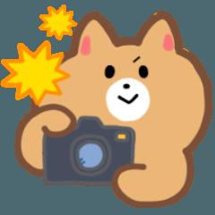 カメラ好きのねこスタンプ(冬用)