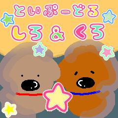 トイプードル シロ&クロ【日常使い】