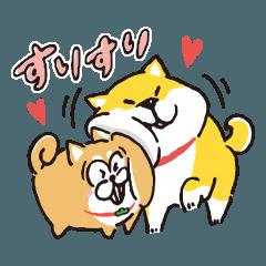 松犬×しばんばん