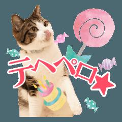 かわいいリアル猫スタンプ[PastelPop]