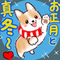 【お正月~真冬】可愛く動く♡コーギー