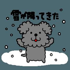 トイプードル 春夏秋冬「冬」