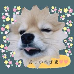 sasuke no STAMP