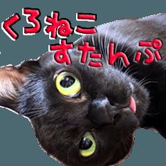 リアル黒猫・日常会話につかえるスタンプ
