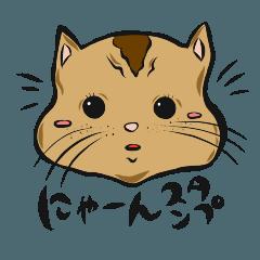クルクル 4 [ にゃんにゃん ]