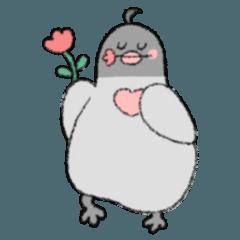 鳩の恋の告白
