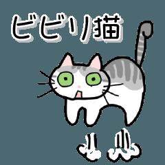 ビビリ猫ワッフルくん