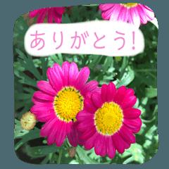 [LINEスタンプ] 花と一緒に