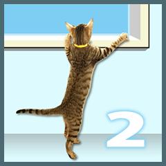 キジトラ猫のかわいい写真スタンプ2