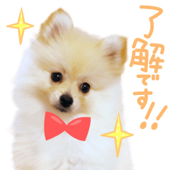 [LINEスタンプ] 毎日使えるポメラニアン 子犬編