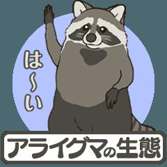 アライグマの生態:どうぶつアニメスタンプ