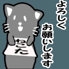 猫のビジネス日常