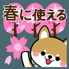 豆柴の春に使えるスタンプ【柴犬】