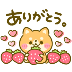 ほのぼの♡豆柴日和