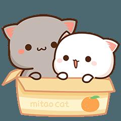 もちもち動く猫ちゃん6