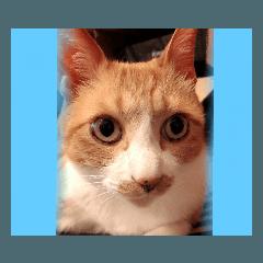 かわいい猫ちゃん!