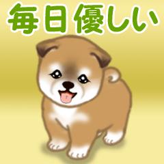 [LINEスタンプ] よちよち秋田犬 毎日優しいスタンプ
