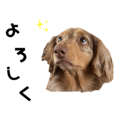 [LINEスタンプ] マロン2017 (1)