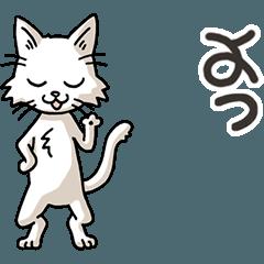 猫大好き!その29a(白猫)