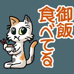 猫大好き!その29c(三毛猫)