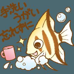 まいにち熱帯魚