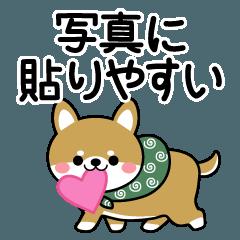 写真に貼りやすい♡柴犬(豆柴)